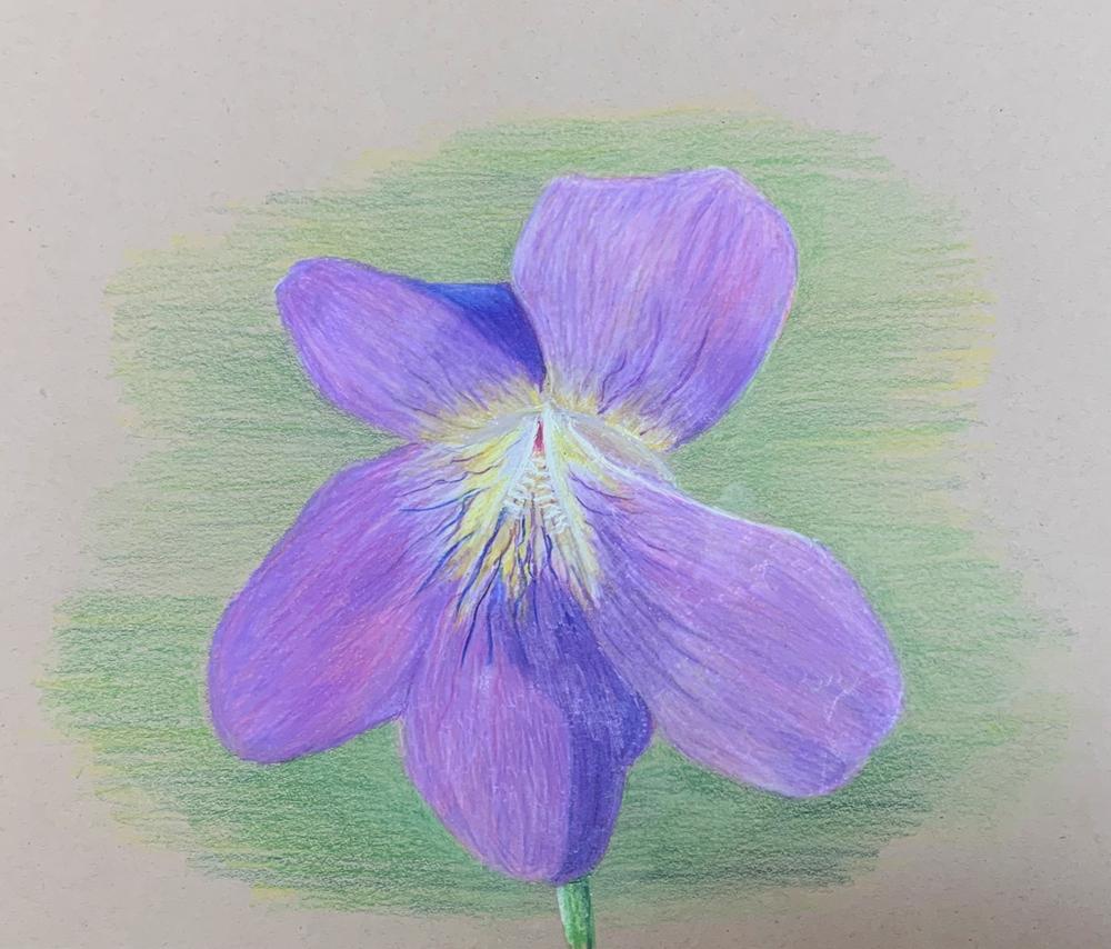 Nature Study (Grade 7) -colored pencil